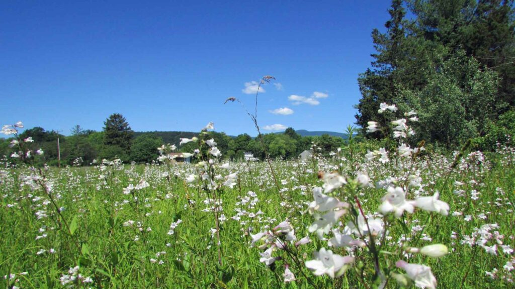 """""""LILY FIELD"""" 3 Luscious Acres Saugerties NY – Fields & Woods – Level – Some Engineering – Survey – Mt views – Borders pond in rear – Great loc – Only $24,900!"""